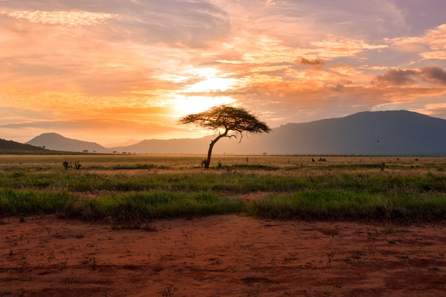 Sunset tree in Kenya Safari, Africa