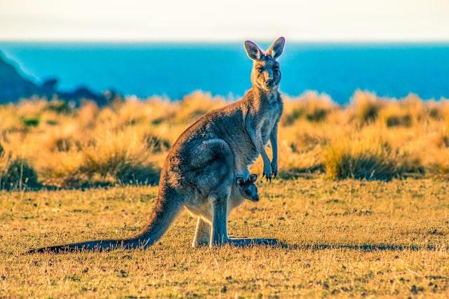 Maria Island, Tasmánie, Austrálie